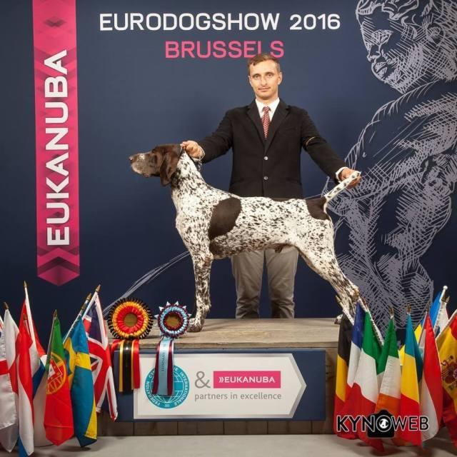 dog show4078830984648059933_n