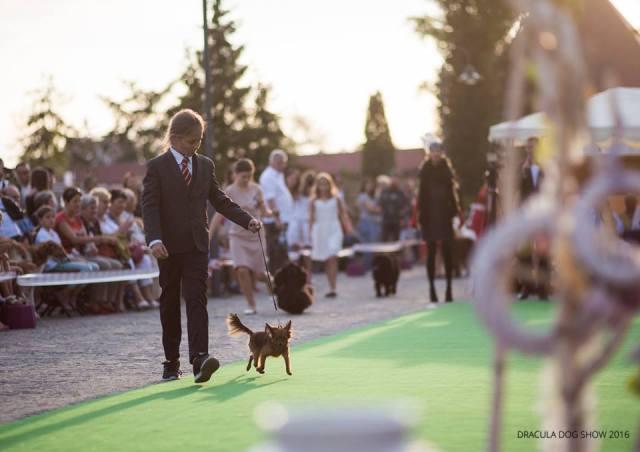 dracula dog sho42041645456922_n