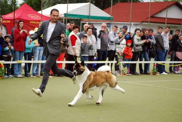 dracula dog show849559_4914656105847212027_n