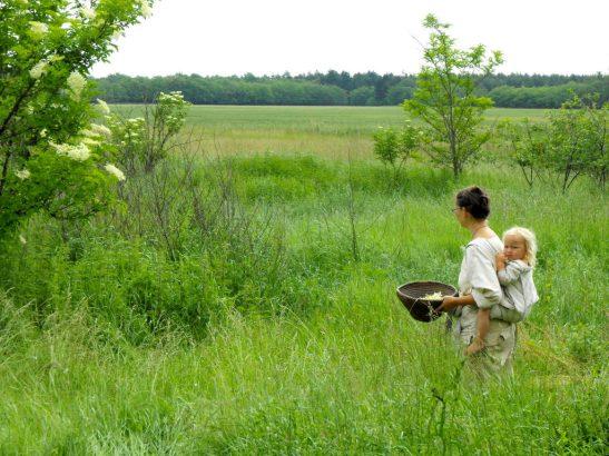 foraging-for-flowers-in-back-garden